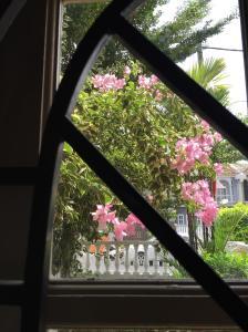 Bougainvillea outside my window